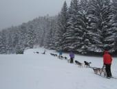 Chiens de Traîneau – Vielle Aure St Lary 7-12 ans Vacances Février